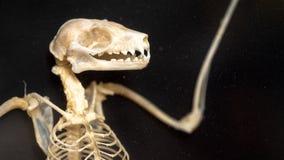 Esqueleto del palo imágenes de archivo libres de regalías