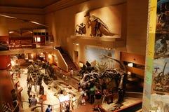 Esqueleto do dinossauro no museu de Washington Imagens de Stock
