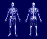 Esqueleto do raio X no azul ilustração royalty free