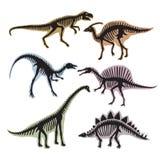 Esqueleto dos dinossauros Vector a silhueta do tiranossauro, do diplodocus e de outro animais selvagens ilustração royalty free