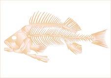 Esqueleto dos peixes Fotos de Stock Royalty Free