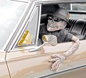 Esqueleto en coche Imágenes de archivo libres de regalías