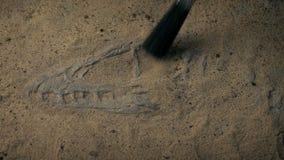 Esqueleto fóssil da ave de rapina jurássico que está sendo escavado no deserto video estoque