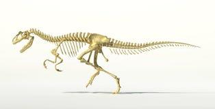 Esqueleto fotorrealista del dinosaurio del Allosaurus. ilustración del vector