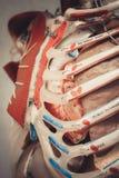 Esqueleto humano órganos huesos fotografía de archivo libre de regalías