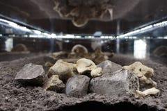 Esqueleto humano Imagen de archivo libre de regalías
