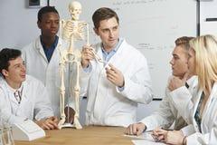 Esqueleto humano de With Model Of del profesor en clase de Biología Fotografía de archivo libre de regalías