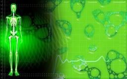 Esqueleto humano femenino en color verde Imágenes de archivo libres de regalías