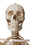 Esqueleto humano, isolado no fundo branco Imagens de Stock Royalty Free
