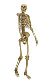 Esqueleto humano que camina en blanco imagen de archivo