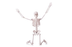 Esqueleto isolado Fotos de Stock