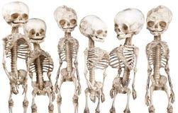 Esqueleto médico humano Foto de archivo libre de regalías