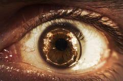Esqueleto macro del globo del ojo imágenes de archivo libres de regalías