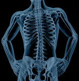 Esqueleto masculino Foto de archivo
