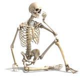Esqueleto masculino correcto anatómico Imágenes de archivo libres de regalías