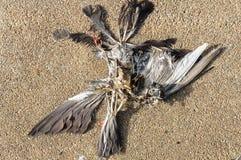 Esqueleto muerto del pájaro Fotografía de archivo