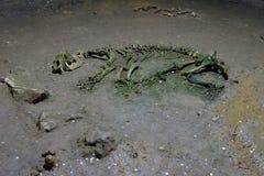 Esqueleto na caverna do urso, montanhas de Apuseni foto de stock