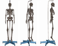 Esqueleto no carrinho Fotografia de Stock Royalty Free