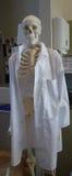 Esqueleto no laboratório de ciência fotografia de stock royalty free