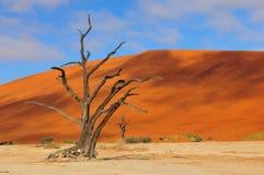 Esqueleto solo del árbol, Deadvlei, Namibia Foto de archivo libre de regalías