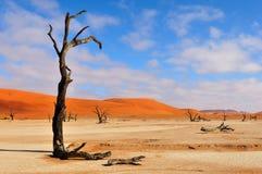 Esqueleto solo del árbol, Deadvlei, Namibia Fotografía de archivo libre de regalías