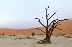 Esqueleto solo del árbol, Deadvlei, Namibia Fotos de archivo libres de regalías