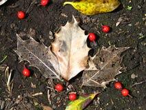 Esqueleto/veias da folha em s húmido Foto de Stock