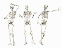 Esqueletos Imágenes de archivo libres de regalías