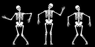 Esqueletos da dança Fotografia de Stock Royalty Free