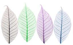 Esqueletos de hojas imágenes de archivo libres de regalías