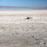 Esqueletos de los pescados en cama de la sal Mar de Salton, California Imagenes de archivo