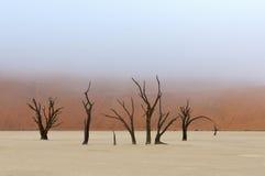 Esqueletos del árbol, Deadvlei, Namibia Imágenes de archivo libres de regalías