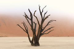 Esqueletos del árbol, Deadvlei, Namibia Imagen de archivo