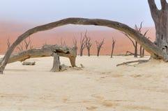 Esqueletos del árbol, Deadvlei, Namibia Foto de archivo