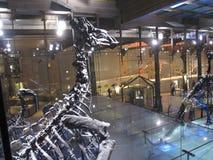 Esqueletos dos dinossauros Fotografia de Stock Royalty Free