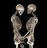 Esqueletos en amor Imagenes de archivo