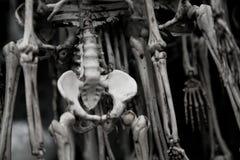 Esqueletos humanos Foto de archivo libre de regalías
