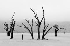 Esqueletos no monochrome, Deadvlei da árvore, Namíbia Fotos de Stock