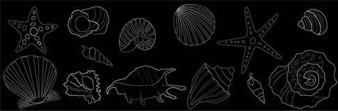 Esquema blanco de estrellas de mar y de conchas marinas en un fondo negro stock de ilustración