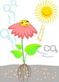 Esquema da fotossíntese na planta Imagens de Stock