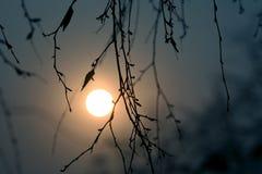 Esquema de las ramas de un árbol en la puesta del sol Imágenes de archivo libres de regalías