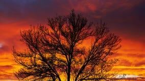 Esquema del árbol en la puesta del sol Imágenes de archivo libres de regalías