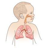 Esquema respiratorio del niño Imágenes de archivo libres de regalías