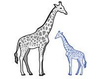Esquemas de la jirafa Fotografía de archivo libre de regalías