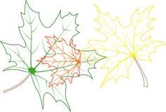 Esquemas de las hojas de arce Stock de ilustración