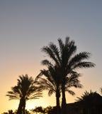Esquemas de las palmeras y casas del centro turístico fotos de archivo