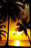 Esquemas tropicales fotografía de archivo
