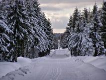 Esqui corta-mato na floresta Foto de Stock Royalty Free
