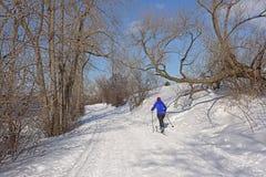 Esqui do esquiador do corta-mato na fuga de Sjam ao longo das árvores desencapadas na neve em um dia de inverno ensolarado com cé fotos de stock royalty free