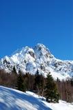 Esqui e árvores azuis das montanhas Fotos de Stock Royalty Free